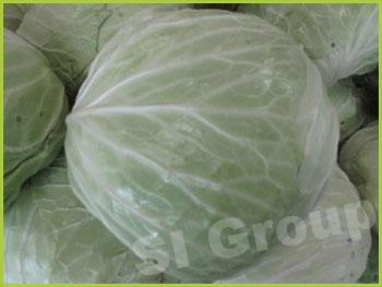 Экспорт, импорт капусты из Тайланда.Капуста Cabbage Thai : Kalumplee Season: All year round Availability: Fresh and Frozen Packaging: As per customer request