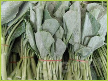 Китайская листовая капуста Kale/Chinese Kale Thai: Kana Season: All year round Availability: Fresh and Frozen Packaging: As per customer request