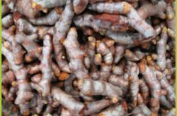 Куркума (Турмерик) Turmeric Thai : Kamin Season: All year round Availability: Fresh and Frozen Packaging: As per customer request