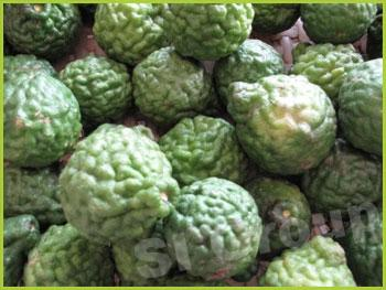 Лайм кафрский Leech (Kaffir) Lime Thai: Makood Season: All year round Availability: Fresh and Frozen Packaging: As per customer request