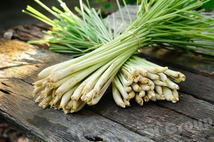 Лемонграс Lemongrass Thai : Taklai Season: All year round Availability: Fresh and Frozen Packaging: As per customer request