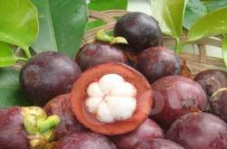 Мангостин Mangosteen Thai (тайское название): Mung Kud Season (сезонность): April - October Availability (вид): Fresh, Whole Frozen, Frozen meat Packaging (упаковка): Tray or Carton Box