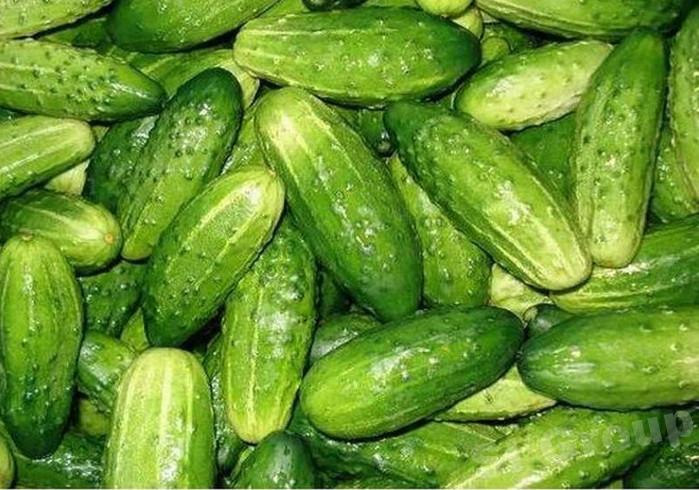 Огурец Cucumber Thai: Tangkua Season: All year round Availability: Fresh and Frozen Packaging: As per customer request