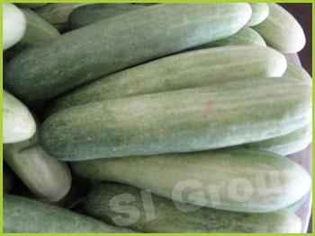 Огурец длинный Long Cucumber  Thai: Tanglan Season: All year round Availability: Fresh and Frozen Packaging: As per customer request