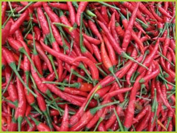 Перец Чили красный Chili pepper red Thai : Plik Season: All year round Availabitily: Dried, Fresh and Frozen Packaging: As per customers request