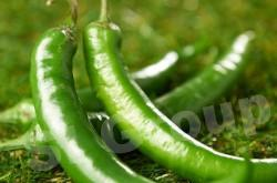 Перец Чили зеленый Chili pepper green Thai : Plik Season: All year round Availabitily: Dried, Fresh and Frozen Packaging: As per customers request