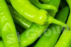 Перец Чили зеленый крупный Chili pepper green large Thai : Plik Season: All year round Availabitily: Dried, Fresh and Frozen Packaging: As per customers request