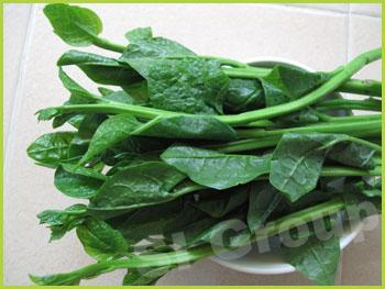 Шпинат цейлонский Ceylon Spinach Thai : Pakpung Season: All year round Availability: Fresh and Frozen Packaging: As per customer request