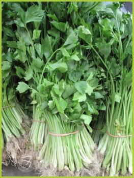 Сельдерей Celery Thai: Kheunchai Season: All year round Availability: Fresh and Frozen Packaging: As per customer request