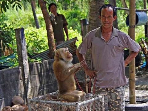 Tailândia fatos - Top 10 os fatos mais surpreendentes sobre Tailândia
